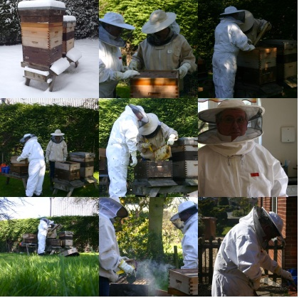 Sally Beekeeping!